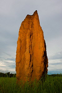 Cathedral Termite mount, Litchfield National Park, Northern Territory, Australia  -  Ingo Arndt