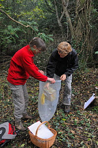 Ian Chambers of Backwell Enviroment Trust lowering a nestbox containing a Common / Hazel dormouse (Muscardinus avellanarius) into a plastic sack held by Gill Brown, before taking measurements, in copp...  -  Nick Upton