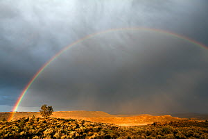 Juniper tree (Juniperus) with rainbow and clouds, at Buena Vista Overlook in the Malheur National Wildlife Refuge, Oregon, USA, May 2013. - Kirkendall-Spring