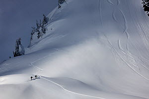 Back country skiers at the base of Table Mountain in the Mount Baker Wilderness, Washington, USA. March 2013.  -  Kirkendall-Spring