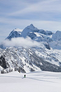 Backcountry skier near Artist Point  in The Heather Meadows Recreation Area, Washington, USA. March 2013.  -  Kirkendall-Spring