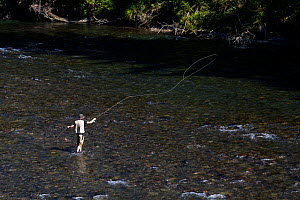 Man fly fishing on the Middle Fork of the Snoqualme River near North Bend, Washington, USA, July 2013. Model released. - Kirkendall-Spring