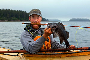 Man with Black rockfish (Sebastes melanops) caught with a fly rod in the Strait of Juan de Fuca. Washington, USA. July 2013. Model released. - Kirkendall-Spring