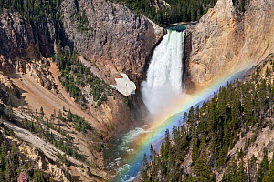 Lower Yellowstone Falls with rainbow, on the Yellowstone River viewed from Lookout Point Trail, Yellowstone National Park, Wyoming, USA, June 2013.  -  Kirkendall-Spring