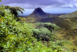 Santa Cruz Island highlands with Puntudo spatter cone and lush vegetation with Cyathea treeferns and Miconia, Galapagos, Ecuador. - Tui  De Roy