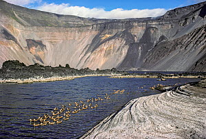 Mineral lake with White-cheeked pintails (Anas bahamensis) during quiet volcanic period, on volcanic caldera, Fernandina, Galapagos, Ecuador.  -  Tui  De Roy