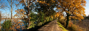 Panoramic of recently restored dyke along the Rhone river, Camargue, France, December 2012.  -  Jean E. Roche
