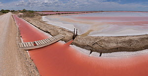 Salt pans with high salt concentration. Salin de Giraud, Camargue, France, June 2013.  -  Jean E. Roche