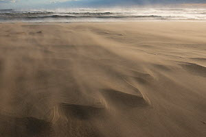 Wind blowing sand across beach, causing delta patterns, Piemanson, Camargue, France, October.  -  Jean E. Roche