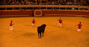 Group of bullfighters in European Bullfighting Championship 2012, Arenes d'Arles, Camargue, France, September 2012.  -  Jean E. Roche
