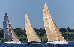 'Intrepid', 'Victory 83', and 'Courageous', the classic 12 metre yachts, racing against each other during the New York Yacht Club Annual Regatta, New York, USA, June 2013. All non-editorial uses must...  -  Onne  van der Wal