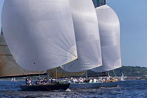 'Victory 83', 'Courageous' and 'Intrepid' racing downwind with spinnakers up, New York Yacht Club Annual Regatta, New York, USA, June 2013. All non-editorial uses must be cleared individually.  -  Onne  van der Wal