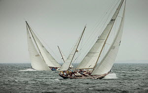 'Bolero' and 'Black Watch' crossing tacks during the Classic Yacht Regatta, Newport, Rhode Island, USA, August 2013. All non-editorial uses must be cleared individually.  -  Onne  van der Wal
