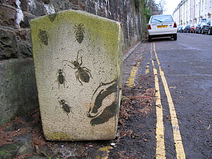 Badger and insects graffiti on a grit box, Bristol, UK  -  Tom  Gilks