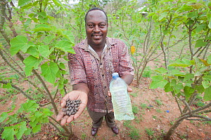 Farmer standing in Jatropha plantation, holding Jatropha beans and bottle with Jatropha oil (used as a biofuel), Tanzania.  -  Tom  Gilks