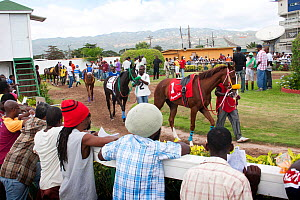 Punters inspecting horses' form in the paddock area before a race at Caymanas Park Racing Track, Kingston, Jamaica.  -  Tom  Gilks