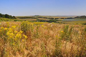 Fallow field with flowering Common ragwort (Jacobaea vulgaris),  Common Hogweed (Heracleum sphondylium) and Spear thistles (Cirsium vulgare) with mix of pastureland, arable crops, tree belts and the R... - Nick Upton