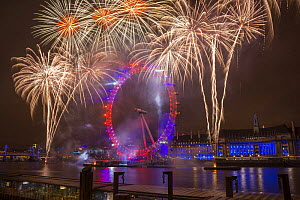 Fireworks over the London Eye on New Years Eve 2012. London, England, UK.  -  Peter  Lewis