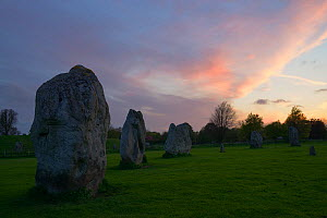 Avebury standing stones at sunset, part of the Stonehenge, Avebury and Associated Sites UNESCO World Heritage Site, Wiltshire, England, UK, May. 2013. - Peter  Lewis