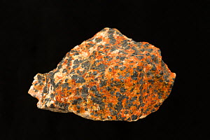 Rock containing Willemite, Franklinite, Zincite, Calcite from New Jersey, USA  -  John Cancalosi