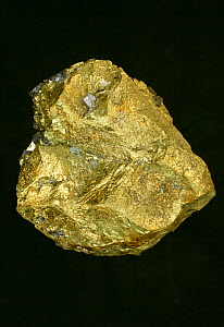 Chalcopyrite (CuFeS2) a mineral ore of copper, from Madan, Bulgaria. This is a copper iron sulfide mineral that crystallizes in the tetragonal system.  -  John Cancalosi