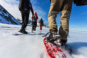 Tourists and guide using snowshoes on an ecotourism trekking holiday, Svalbard, Norway, June, 2012. Model released.  -  Christophe Courteau