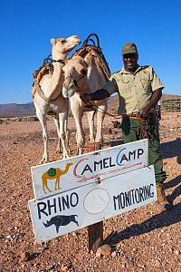 Save the Rhino Trust camel camp patrol team member Hans Ganaseb with camels, Kunene region, Namibia, May 2013 - Ann  & Steve Toon