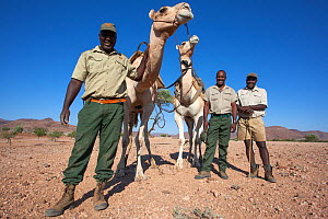 Save the Rhino Trust camel camp patrol teams Hans Ganaseb (left) and Dansiekie Ganaseb with Simson Uri-Khob (no hat) and camels, Kunene region, Namibia, May 2013 - Ann  & Steve Toon