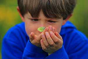 Boy looking at Green-veined White butterfly (Pieris napi) on his hand, Dorset, UK, May 2013, Model released. - Robin Chittenden