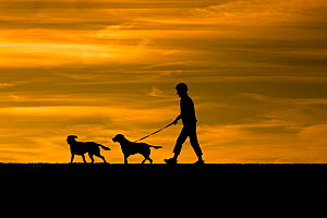Man walking dogs on Dunwich beach, Suffolk, August. - Ernie  Janes