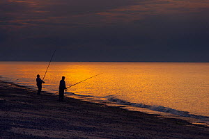 Fly fishermen fishing for Mackerel off Cley Beach at sunset, Norfolk, August 2013. - Ernie  Janes