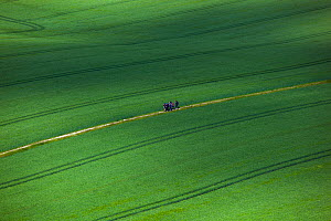 Group of hikers walking though cereal crop, England, UK - Ernie  Janes