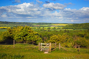 Upper Gade Valley in the Chilterns, from Ivinghoe Hills, Buckinghamshire, England, UK, June 2013. - Ernie  Janes