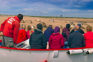 Boat full of people watching Common Seals (Phoca vitulina) on sand bank at Blakeney Point, Norfolk, August 2013.  -  Ernie  Janes