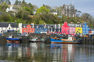 View of the harbour at Tobermory, Isle of Mull, Scotland, UK, May 2013.  -  Gary  K. Smith