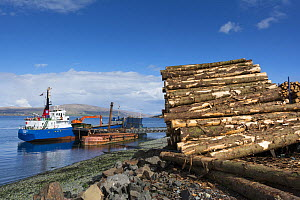 Softwood coniferous timber ready for transport to mainland, Isle of Mull, Inner Hebrides, Scotland, UK, May 2013.  -  Gary  K. Smith