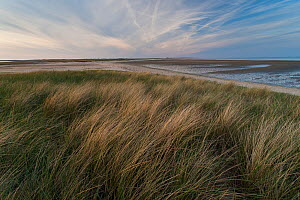 Sunset at the Wadden Sea coast of 'Uthorn' Nature Reserve, List, Island of Sylt, Wadden Sea National Park, UNESCO World Heritage Site, Germany.  -  Florian Möllers
