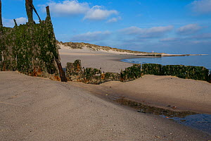 Lighthouse in the dunes of the 'Ellenbogen' (elbow), the northernmost place on the Island of Sylt and destroyed wave breakers. June, Island of Sylt, Wadden Sea National Park, UNESCO World Heritage Sit...  -  Florian Möllers