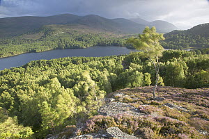 View over Rothiemurchus forest in late summer evening light, Cairngorms National Park, Scotland. - Pete Cairns