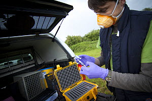 Licenced Wildlife Trust vaccinator preparing badger bovine TB vaccine in the field. Vaccine is 'live' and mixed in two parts just before administration. Cheshire, England, UK, May 2013.  -  Tom  Marshall