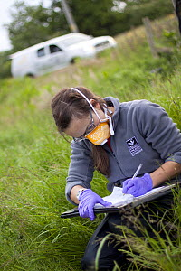 Wildlife Trust staff recording information during badger (Meles meles) bovine TB vaccination scheme in South Cheshire. May, 2013.  -  Tom  Marshall