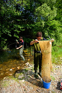 Scientists trapping Three-spined stickleback (Gasterosteus aculeatus) for biometrics study in the river Daro, Gavarres Natural Area, Catalonia, Spain, May 2008. - Oriol  Alamany