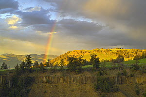 Rainbow after thunderstorm, Yellowstone National Park, Wyoming, USA, June.  -  George  Sanker