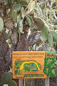 Sign for walking trail in Charles Darwin Research Center, with Opuntia cactus, Galapagos Islands.  -  Michele  Westmorland