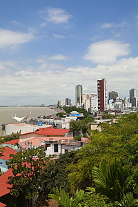 View from Las Penas galleries, Santa Ana Hill,  Guayaquil, Ecuador - Michele Westmorland, Westmorland Images, LLC