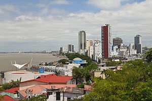 View from Las Penas galleries, Santa Ana Hill,  Guayaquil, Ecuador, August 2010. - Michele Westmorland, Westmorland Images, LLC