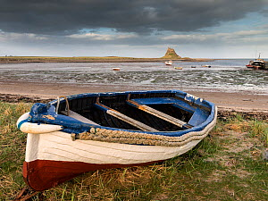 Fishing boat on shore with Lindisfarne Castle in the distance, Holy Island, Northumberland, UK, April 2013.  -  Ross Hoddinott