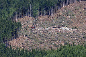 Area of  clearcut coniferous forest. British Columbia, Canada, August 2013 - David  Pattyn