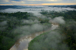 Aerial view of morning mist above the Tiputini River in Yasuni National Park, Francisco de Orellana Province, Ecuador, July. - Tim  Laman