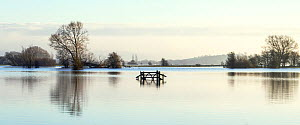 Panorama flooded fields with gate on West Sedgemoor near Stoke St Gregory, Somerset Levels, Somerset, UK. January 2014. Digital composite, larger file available. - John Waters